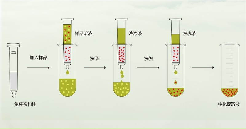 玉米赤黴烯酮免疫親和柱操作流程