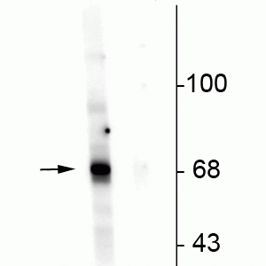 p104-342-WB-CNC
