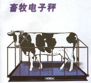 犊牛称重器